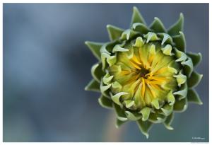 Desert Flower in Color