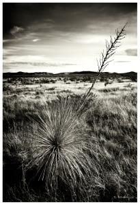 The El Paso Desert